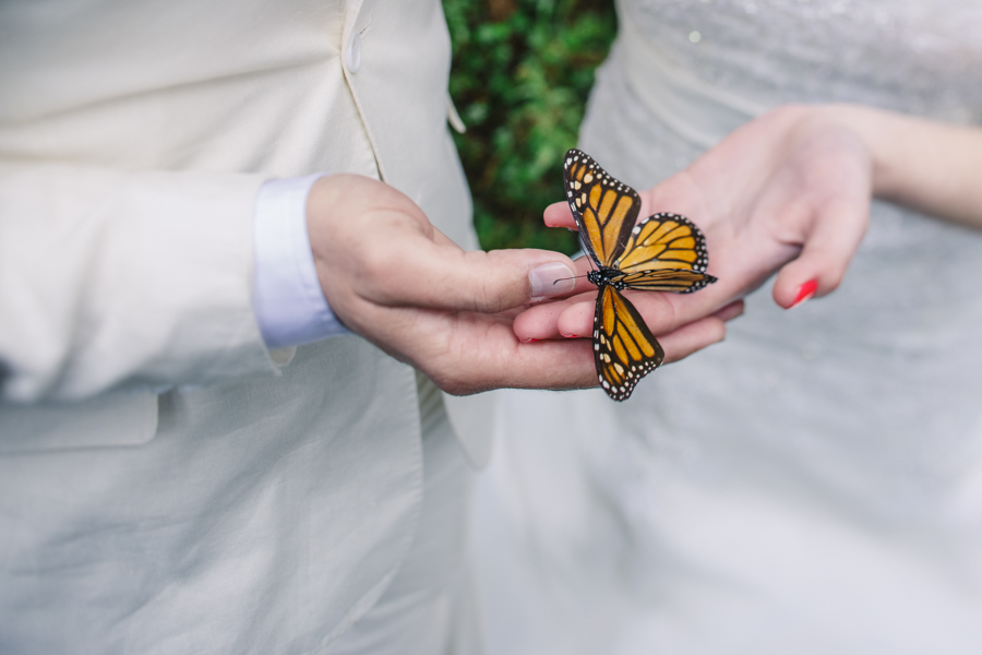 mariposas-monarcas-michoacan-wedding-photography