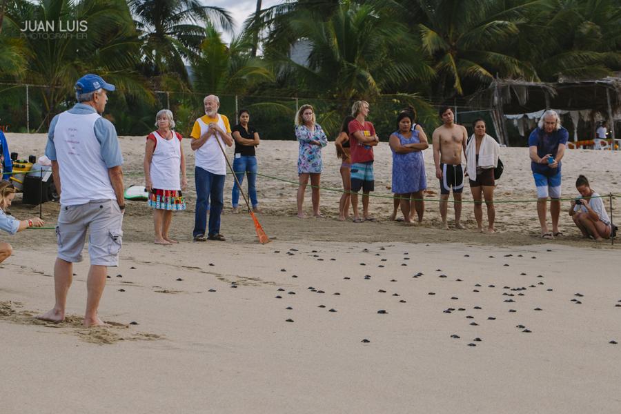 turtle-release-volenteer-san-pancho-nayarit-wedding-photographer
